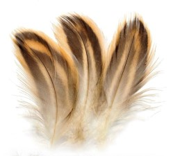 Mallard Hen Breast Feathers Natural