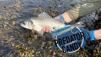 Predator Candy Streamer - Complete Tying Kit - Fly Supply TV